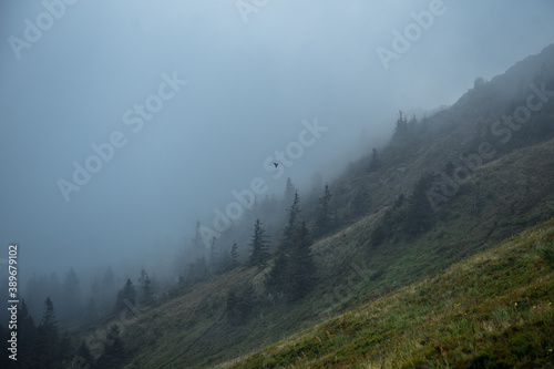 Close up of foggy hillside with few conifer trees Canvas Print