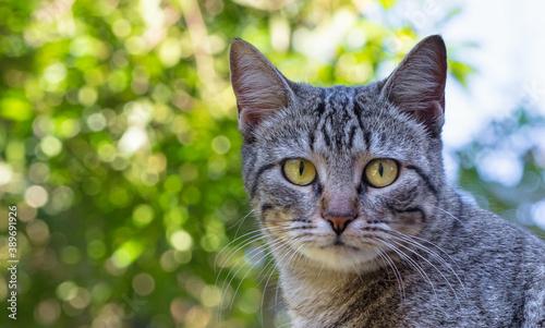 Vászonkép Close up de gato cinza