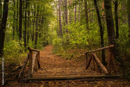 Fototapeta Mystical forest lanes lead to unknow wonder places. obraz na płótnie