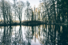 Fantastic Autumn Bare Trees View With Reflections On A Forest Lake