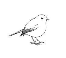 Hand Drawn Vector Ink Illustration Of Robin Bird. Coloring Page