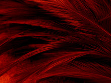 Beautiful Abstract Red Feather...