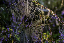 Beautiful Shot Of A Spiderweb Hanging On Branches