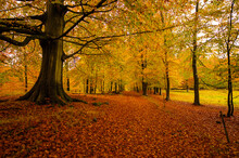 Danish Autumn Forest In Beauti...