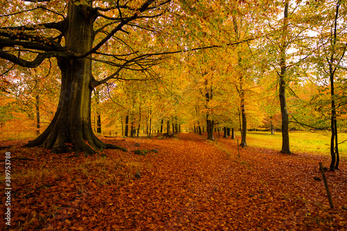 Danish autumn forest in beautiful colours Canvas Print