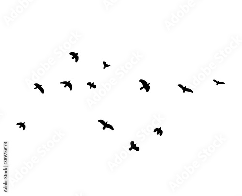 Photographie A flock of flying birds. Vector illustration