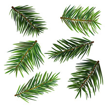 Spruce Branches Isolated On Wh...
