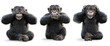 Three wise Monkeys .Monkey see no evil , hear no evil , speak no evil concept . 3d rendering