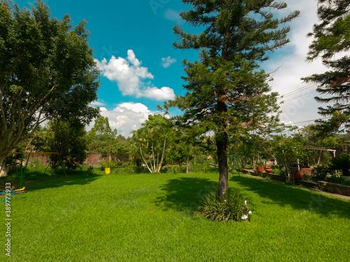 Jardín con distintos árboles, plantas y pino junto a juegos infantiles en un espacio con césped o pasto y cielo azul Canvas