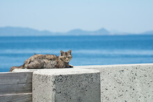 Cat Sitting On The Embankment On A Hot Summer Day