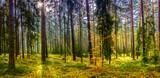 Fototapeta  - panorama jesiennego lasu