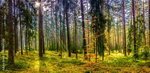 Fototapeta panorama jesiennego lasu obraz