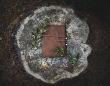 Journal On A Tree Stump
