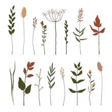 Set Of Floral Elements. Botani...