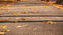 City Footpath Strewn With Fall...