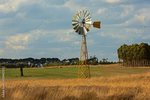 Vászonkép Sunlit windmill in a paddock in country Victoria, Australia.