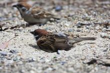 On A Sunny Day 2 Sparrows Enjo...