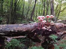 A Bunch Of Mushrooms In A Dark...