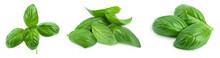 Fresh Basil Leaf Isolated On W...