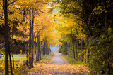 Fototapeta Perspektywa 3d - Beautiful and colorful autumn collection of Ginkgo leaves and paths in the park