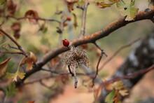 Wildflower, Close Up