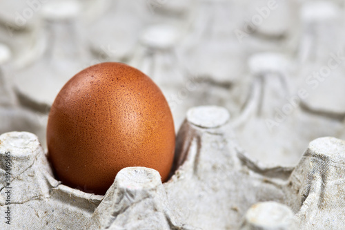 Chicken egg in paper egg tray, copy space. Canvas