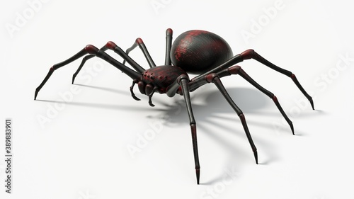 Fotografija black spider with red skin details