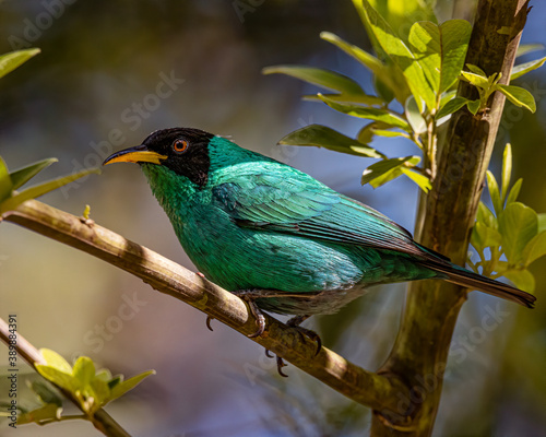 A colorful bird perched on a tree branch on a sunny day Canvas Print