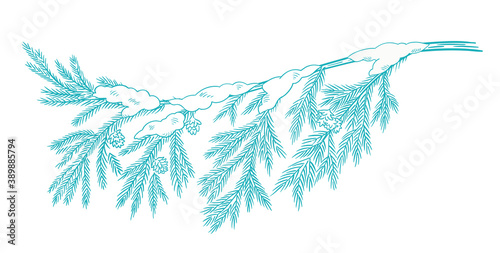 Fototapeta Branch christmas tree with snow. Conifer spruce. Frosty winter. New year fir-tree postcard background clipart. Hand drawn contour vector sketch. Fir cones. obraz