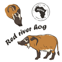 Red River Hog Vector Image Isolated On White Background.  African Wild Animal.  Bush Pig In Full Growth And Profile Head, Color Design. Animal Of Africa. Bushpig – Wild Pig With Tassels On The Ears.