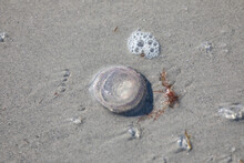 Tiny Round Jellyfish On The Sand With Bubbles