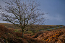 Moorland Tree In The Autumn In...