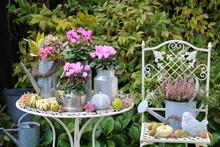 Herbst-Gartendekoration Mit Pink Alpenveilchen In Vintage Töpfen