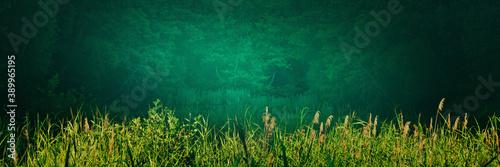 Foto Lakeshore panorama with bulrushes, reeds, sedge