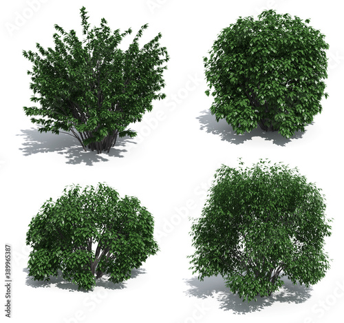 Canvastavla shrubs isolated on white background