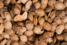 Dry Apricot Kernels Close Up Background