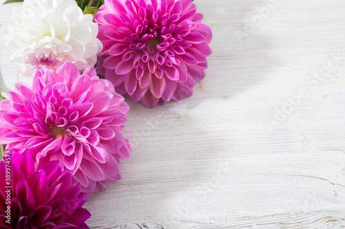 Cuadros en Lienzo Purple autumn dahlias is on the white background
