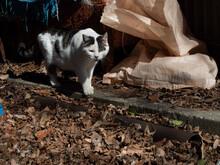 野良猫の暮らし