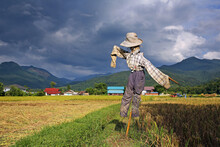 A Scarecrow In The Yellow And ...