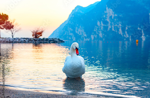 Fotomural swans and ducks on lake Garda against of a picturesque sunset and mountains