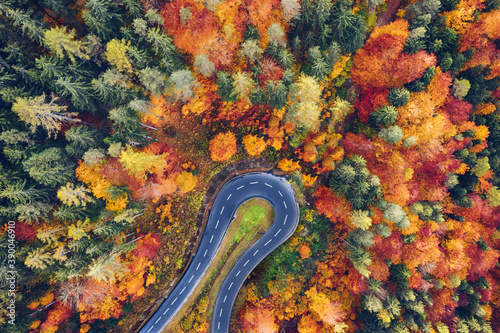 Obraz Aerial view of forest and trees in autumn with a tight curve of a mountain road - fototapety do salonu