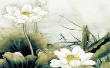Drawn Large Water Lilies And D...
