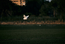 White Heron Bird Flying Over T...