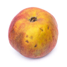 Old Wrinkled Apple