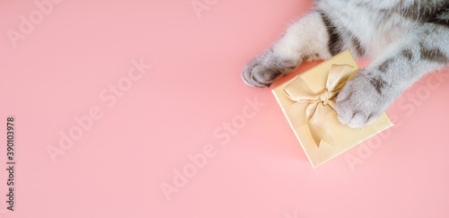 Gray striped cat's paw and golden gift box on pink background. New year, christmas, holiday and pets concept. Minimalism, top view, copy space. © Ольга Холявина