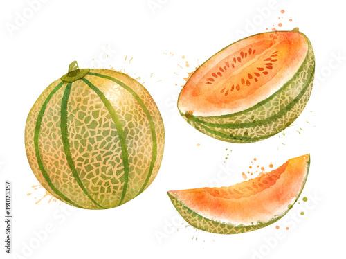 Fototapeta Watercolor illustration of Melon Cantaloupe obraz