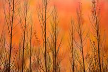 Multi-exposure Of Poplar Leave...