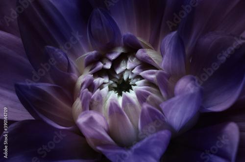 Cuadros en Lienzo Lotus night scene flower background. Macro photography