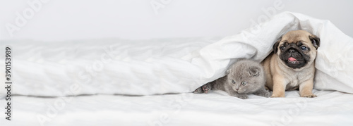 Photo A small pug puppy and a kitten look out from under the white blanket and look towards the empty space
