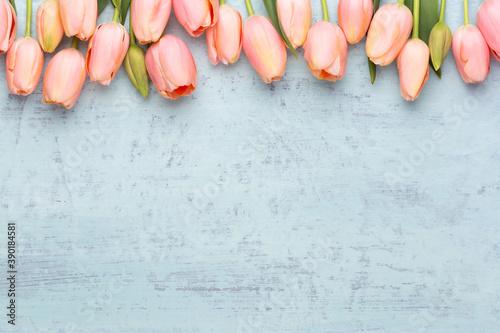 Obraz na plátně Pink tulip on the vintage wooden background